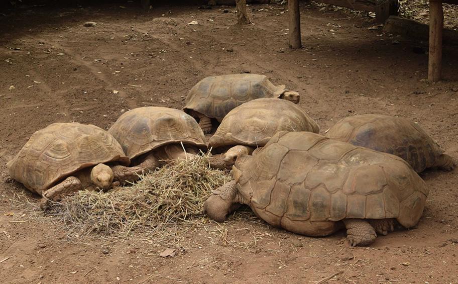 Eiffage participe à la préservation de la biodiversité au Sénégal